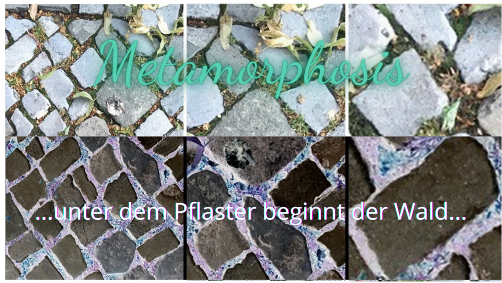 metamorphosis resonanzkoerper